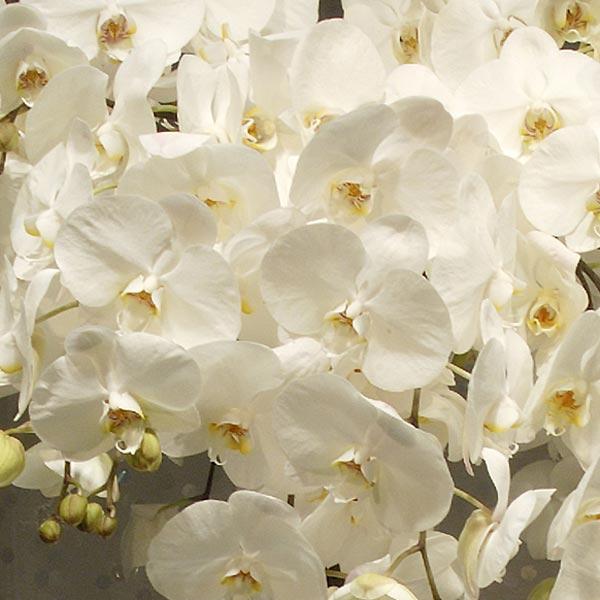 weddingstylist whiteflower4 Άσπρα λουλούδια στον γάμο σας