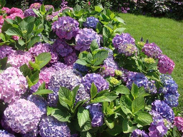 weddingstylist ortansies Τα 10 πιο δημοφιλή λουλούδια για γάμο