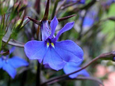 weddingstylist orxidea blue Τα 10 πιο δημοφιλή λουλούδια για γάμο
